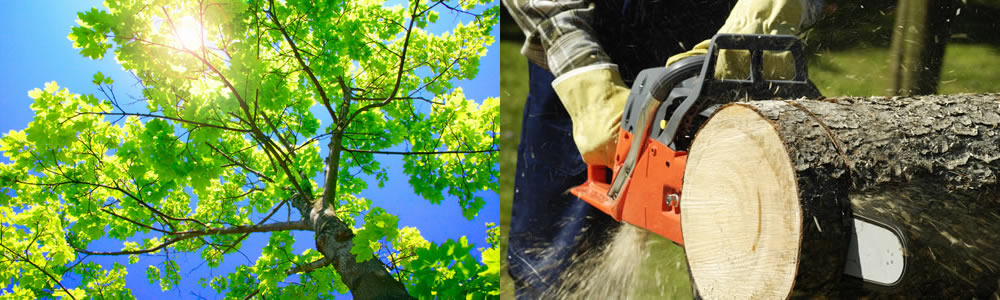 Tree Services Pembroke Pines